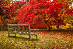 Autumn in Bodnant Garden Royalty Free Stock Photography