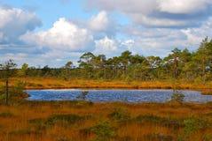 Autumn bog. Autumn in the Soomaa National Park bog, Estonia stock photos