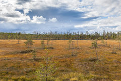 Autumn bog Stock Photos