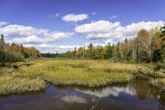 Autumn Bog e cores da queda - Ontário, Canadá imagens de stock