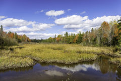 Autumn Bog and Fall Colors - Ontario, Canada. Autumn Bog Bordered by a Vibrant Forest - Ontario, Canada Stock Images