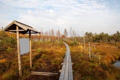 Autumn bog Stock Photo