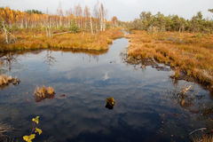 Autumn in bog Royalty Free Stock Image