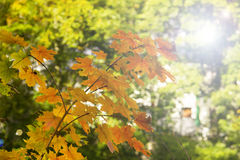 Autumn boke background with backlight Stock Photography