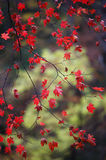 Autumn bokeh 4. Botanic park near Vladivostok. Russia. Far-East stock image