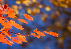 Autumn bokeh 6. Botanic park near Vladivostok. Russia. Far-East Royalty Free Stock Photo