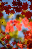 Autumn bokeh 7. Botanic park near Vladivostok. Russia. Far-East royalty free stock photography