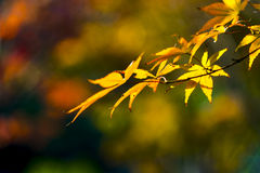 Autumn bokeh background bordered with leaves Stock Photos