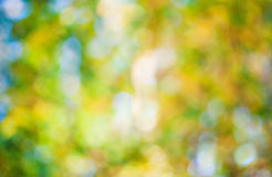 Autumn bokeh Royalty Free Stock Image