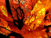 Autumn Bonfire Abstract Stock Photos