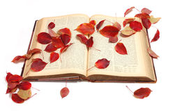 Autumn book. Red autumn leaves on open vintage book Royalty Free Stock Photography