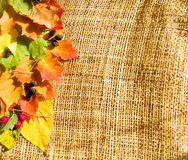 Autumn border. Beautiful border of colorful autumn leaves, berries and cones on sacking background royalty free stock photos