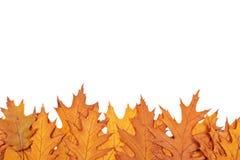 Autumn border Stock Photos