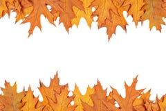 Autumn border Stock Photography