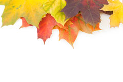 Autumn Border Stock Images