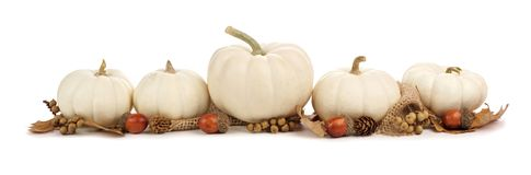 Border of white pumpkins and brown leaves isolated on white. Autumn border arrangement of white pumpkins and brown leaves isolated on a white background stock photos