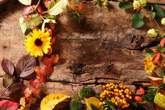 Autumn border with berries, leaves and flowers Royalty Free Stock Photos
