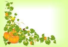 Autumn border, cdr vector Royalty Free Stock Photography