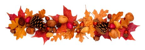 Autumn border of colorful fall leaves, nuts and pine cones, above view isolated on white