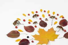 Autumn border. Composition of vibrant red and yellow leaves on a white background. Flat lay Top view trendy background. Royalty Free Stock Image