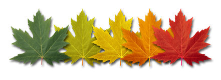 Autumn Border Element Stock Photos