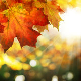 Autumn Border of Maple Leaves on Abstract Bokeh Background Stock Image