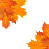 Autumn border of mapple leaves Stock Images