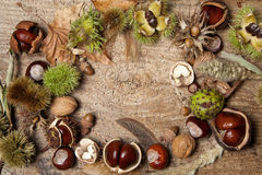 Autumn border with nuts Royalty Free Stock Photos
