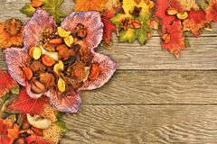 Autumn border over wood Royalty Free Stock Photos