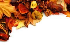 Autumn border Royalty Free Stock Photo