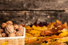 Autumn border with walnuts Royalty Free Stock Images