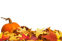 Free Autumn Border With Pumpkin Royalty Free Stock Image - 27278616
