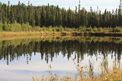 Autumn in the boreal forest. A small pond glimmers in the fall sun Stock Photography