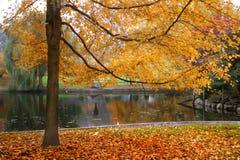 Autumn in Boston. Public Garden Royalty Free Stock Photography