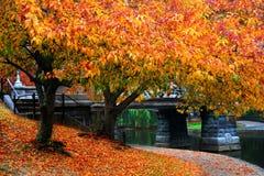 Autumn in Boston. Public Garden Royalty Free Stock Photo