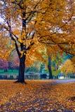 Autumn in Boston. Public Garden Royalty Free Stock Photos