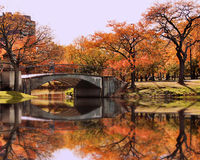 Autumn in Boston. Beautiful reflections bounce off the  listless water of the trees and bright orange leaves Royalty Free Stock Photo