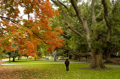 Autumn at Boston Common. A woman taking a walk through Boston Common during the autumn Royalty Free Stock Image