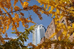 Autumn in Boston, sunny day Stock Photography