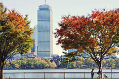 Autumn in Boston. A  tree  changing colors in  Boston on the Charles river across from the prudential building Stock Image