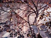 Autumn Botanical Garden photo stock