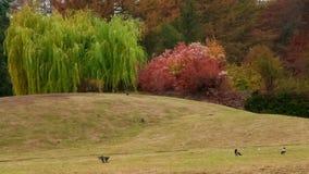 N. Grishko National Botanical Garden. Autumn in the botanical garden. Kiev, Ukraine stock video footage