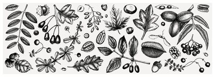 Free Autumn Botanical Set. Collection Of Hand Sketched Fallen Leaves, Seeds, Berries, Nuts On Vintage Background. Fall Season Vector Stock Photos - 191302773