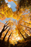 Autumn from the bottom. Autumn foliage from the perspective of the forest floor Royalty Free Stock Photography
