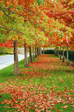 Autumn boulevard. Colorful trees in autumn lining boulevard Royalty Free Stock Images