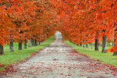Autumn Boulevard. In Tuscany, near Florence Stock Photos