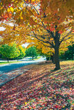Autumn Boulevard. Fallen leaves on the ground during autumn season Stock Images