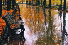 Autumn boulevard in the rain Royalty Free Stock Image