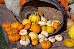 Autumn Bounty 3 Royalty Free Stock Photos