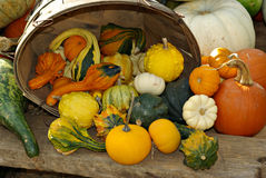Autumn Bounty. A display of decorative squashs Pumpkins for sale at an outdoor farmers market royalty free stock image
